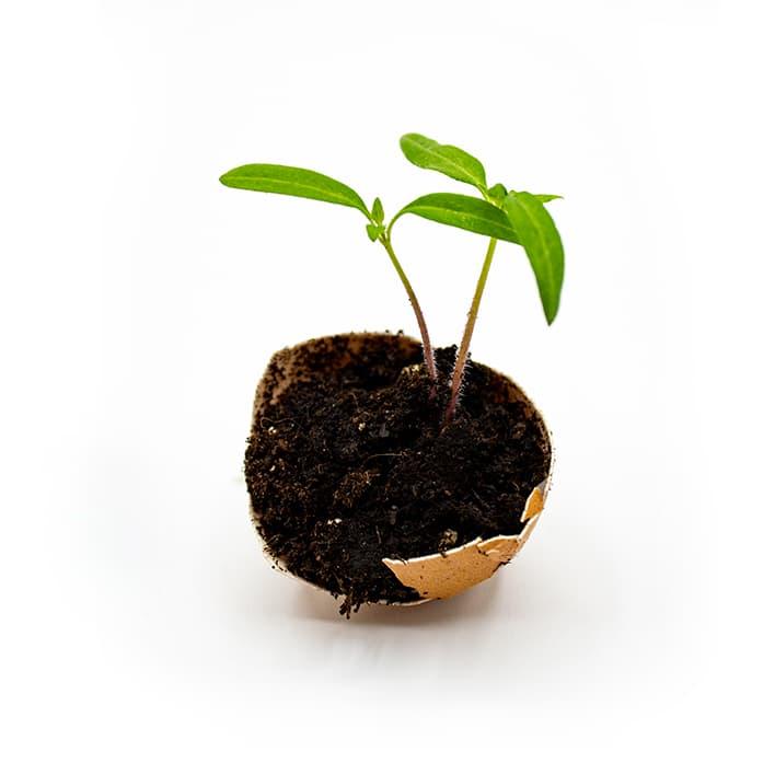 plante qui pousse dans terre