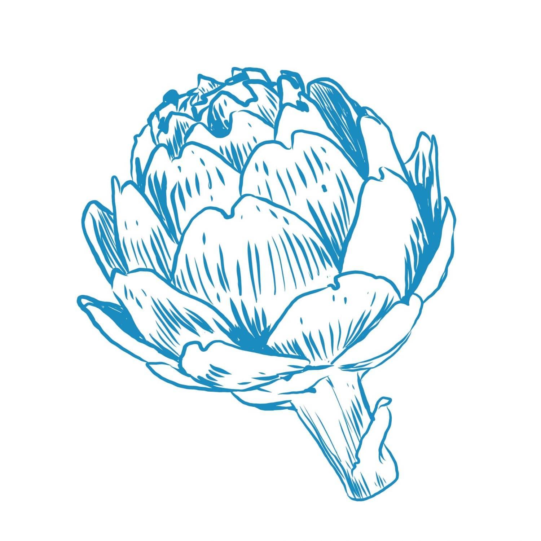 artichaud visuel dessinés au trait bleu